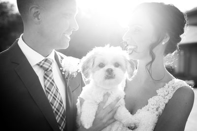 Bride Groom and Dog: Wedding Day