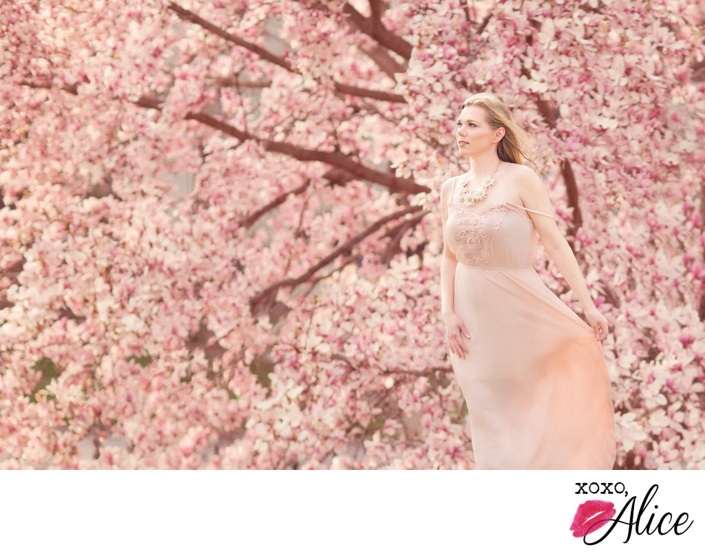 best photographer in st louis springtime magnolias