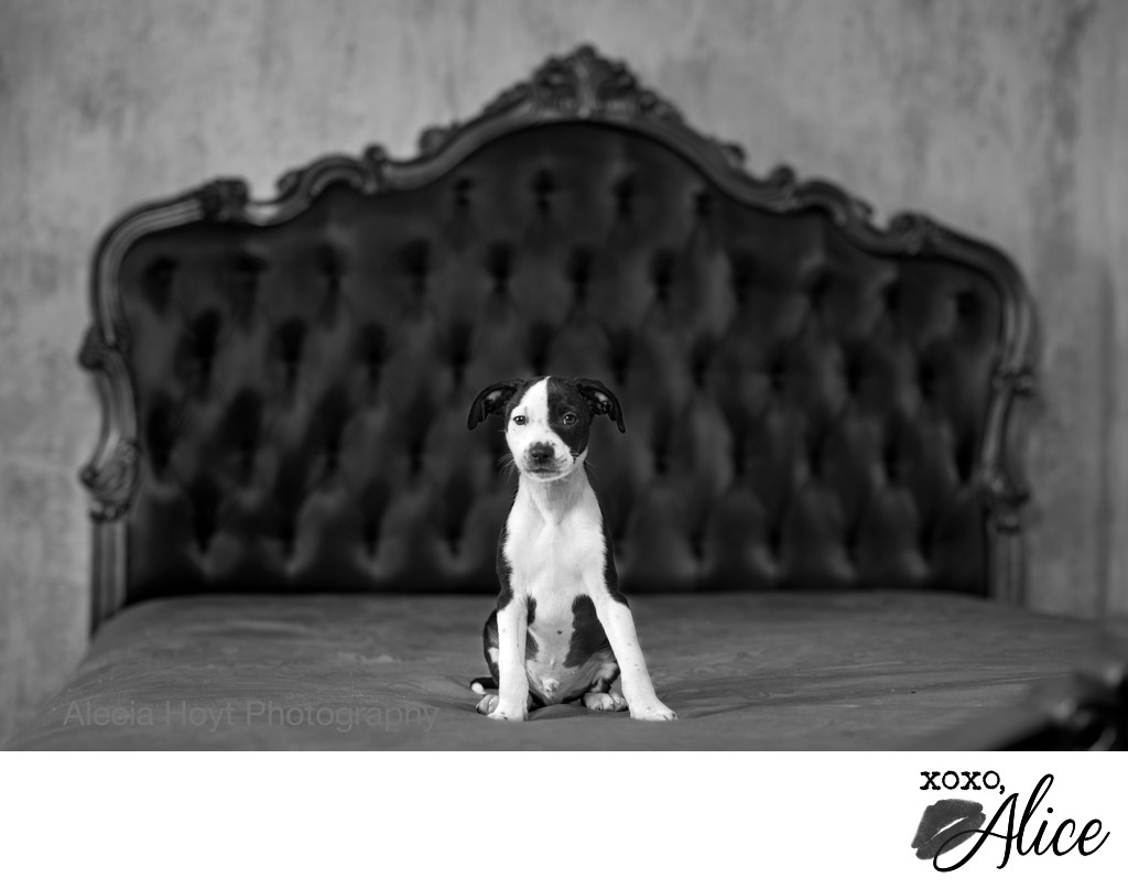 black and white puppy in black and white photo