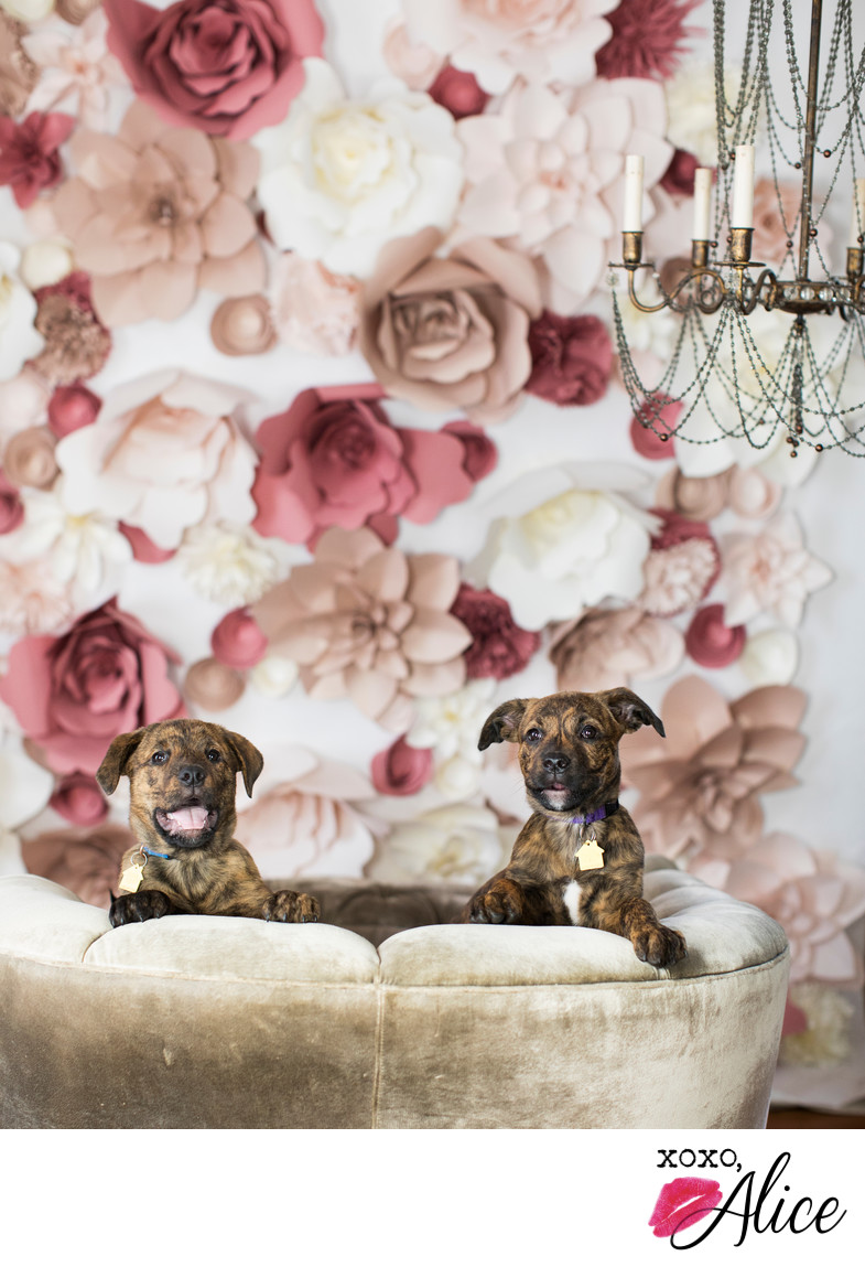 cute puppies with flowers and fancy photo studio