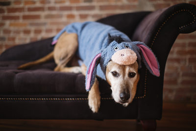 funny dogs in costume dog in eyore costume