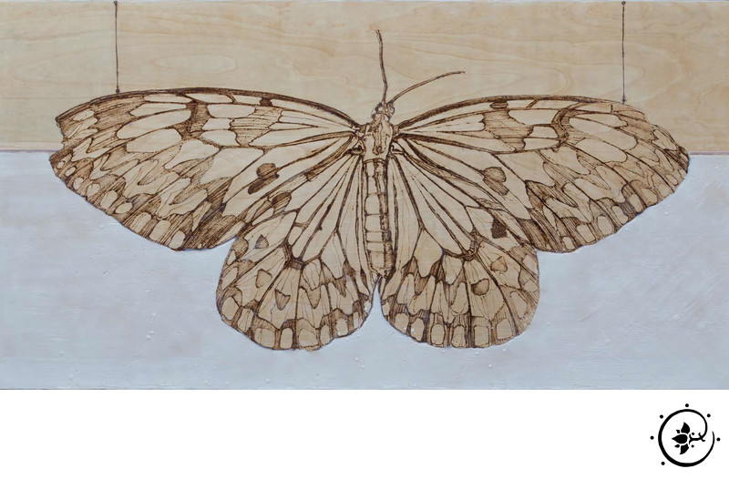 Butterfly #3 - Illusion