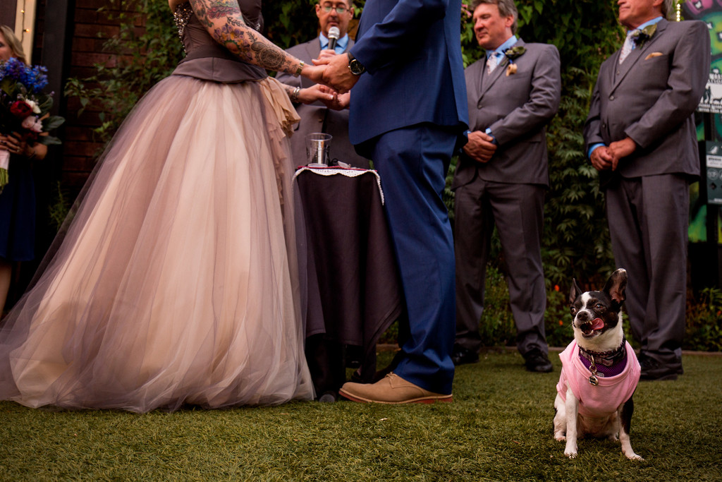 Wedding photos with dogs - Scottsdale Wedding Photo