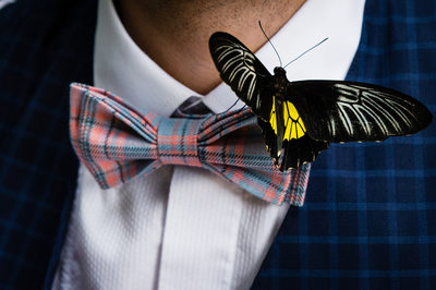 Bow Tie with a Butterfly