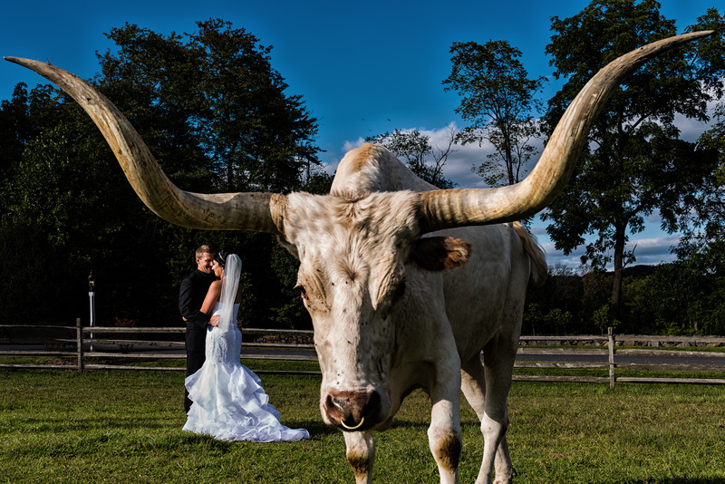 Ironstone Ranch The Star Barn Wedding Photography Longhorn Couple Portrait