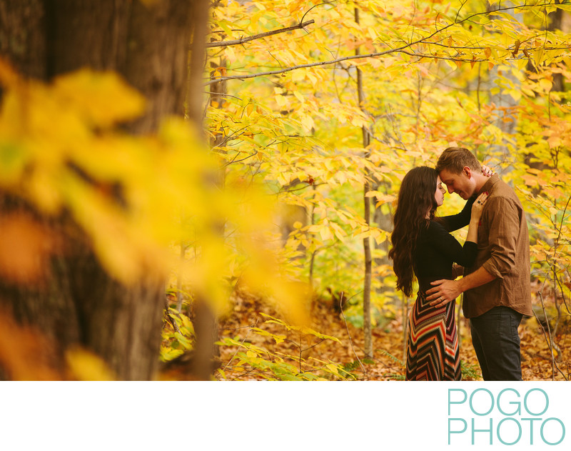 Fall in love with Vermont in the bright yellow foliage