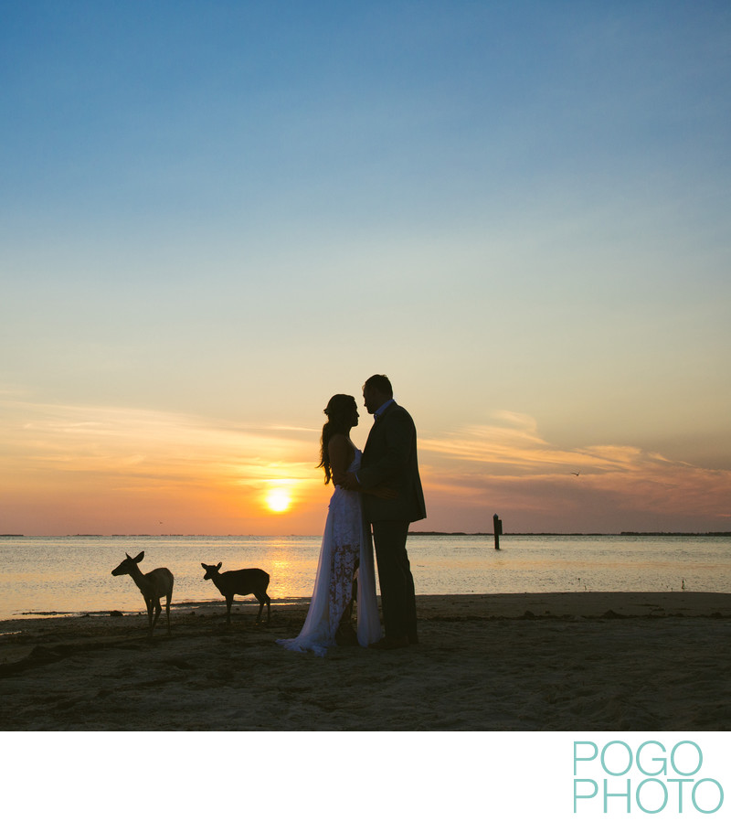 Wedding Portraits with Key Deer on Little Palm Island