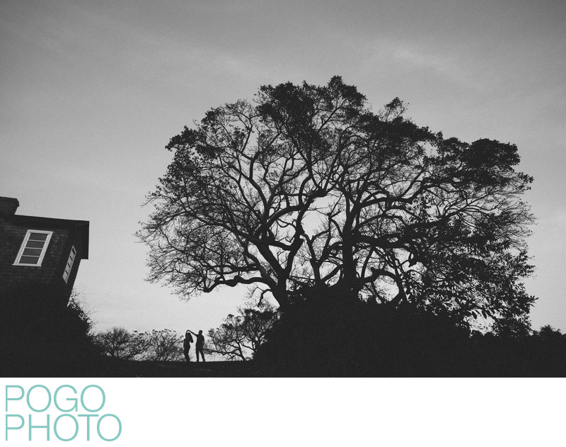Spooky Silhouette Engagement Photo with Giant Tree