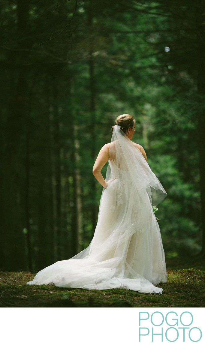Dramatic Bridal Portrait in Vermont Pine Forest