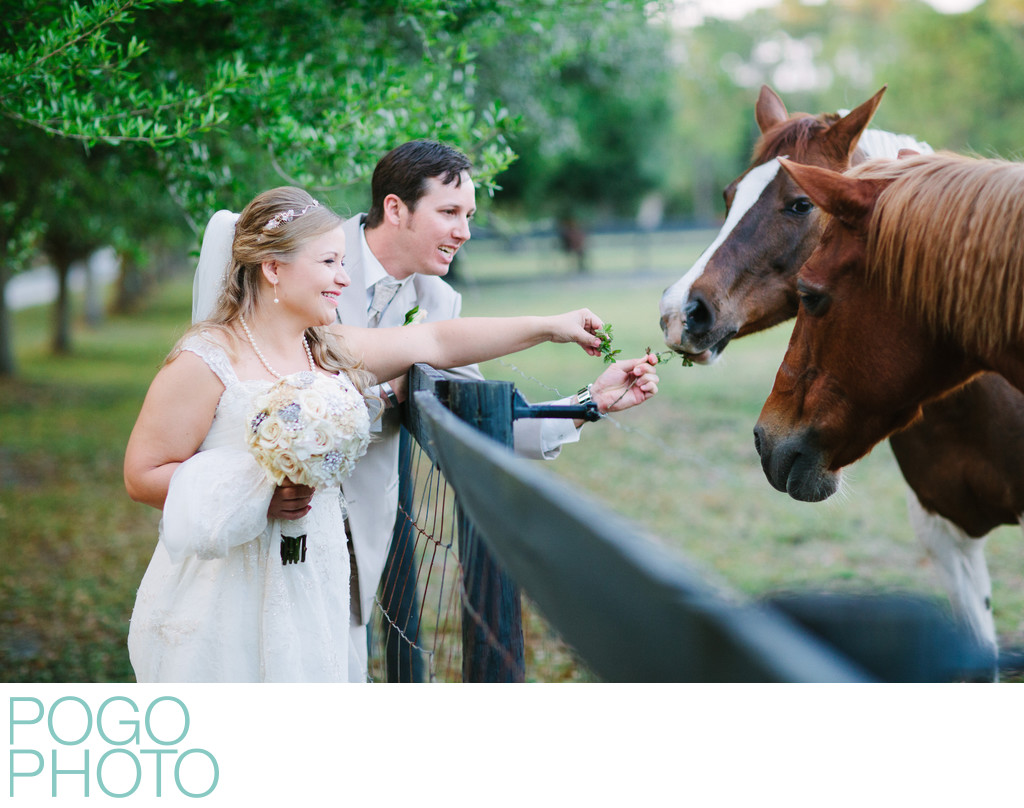 Giggling Couple at Rustic Farm Wedding Feed Horses