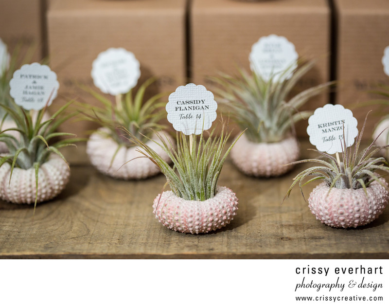 Chester County Photographer - Succulents as Place Cards