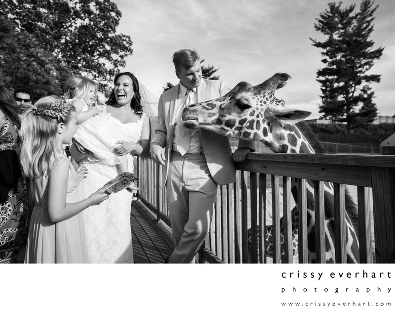 Elmwood Park Zoo Wedding - Feeding Giraffes