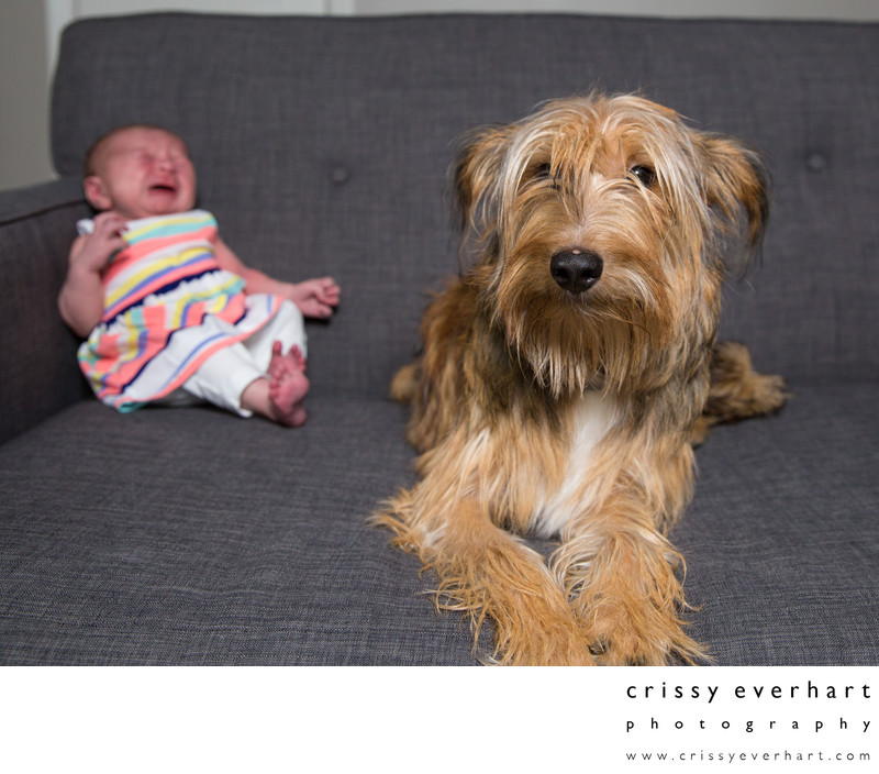 Newborn Photos with Dog - Family Pet Portraits