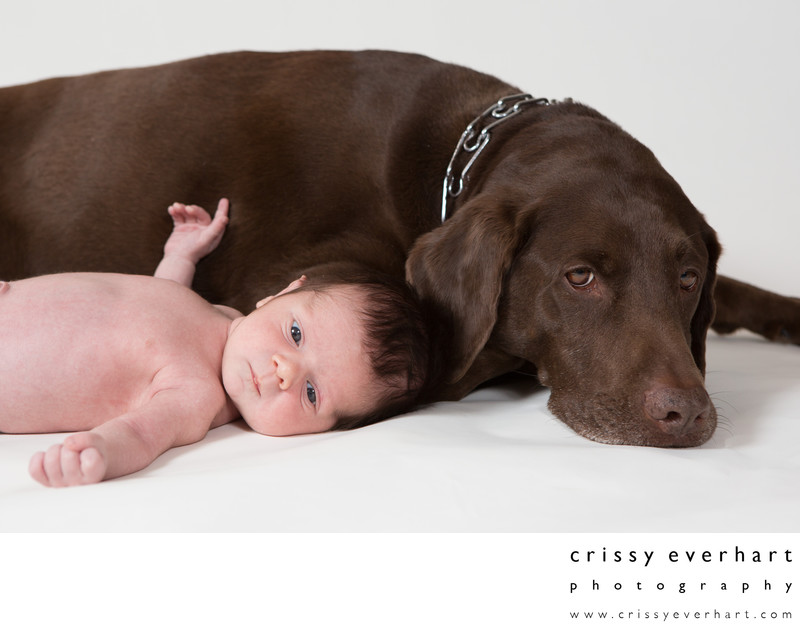 In Home Newborn Photographer - Baby Boy with Dog