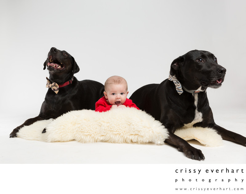 Malvern Pet Photographer - Baby with Two Dogs