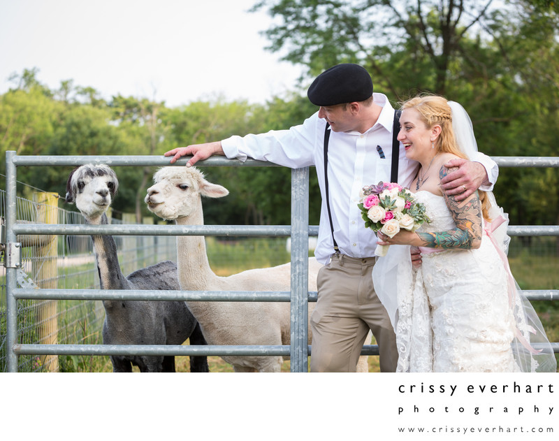 Queens County Farm Wedding with Alpacas