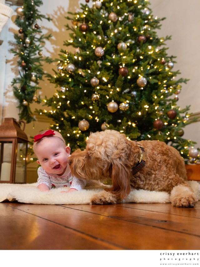 Baby and Dog Under Christmas Tree - Holiday Portraits