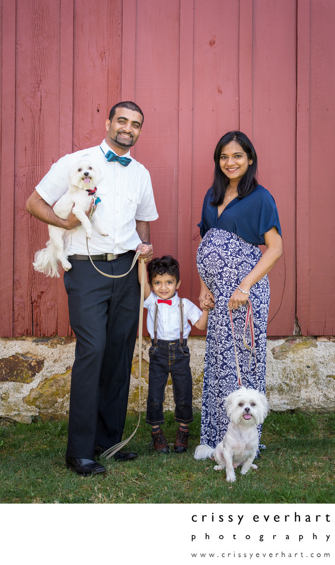 Maternity Family Photos with 2 year old and Dogs