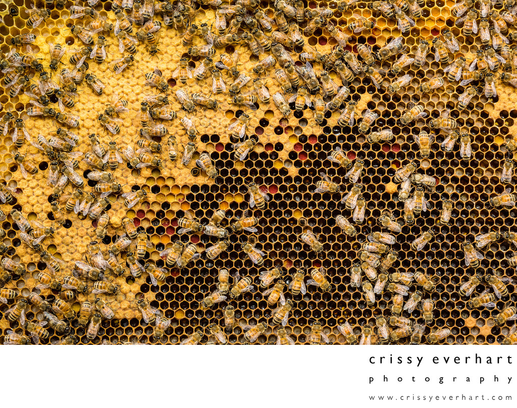 Honeybee Hive Frame Macro Photography