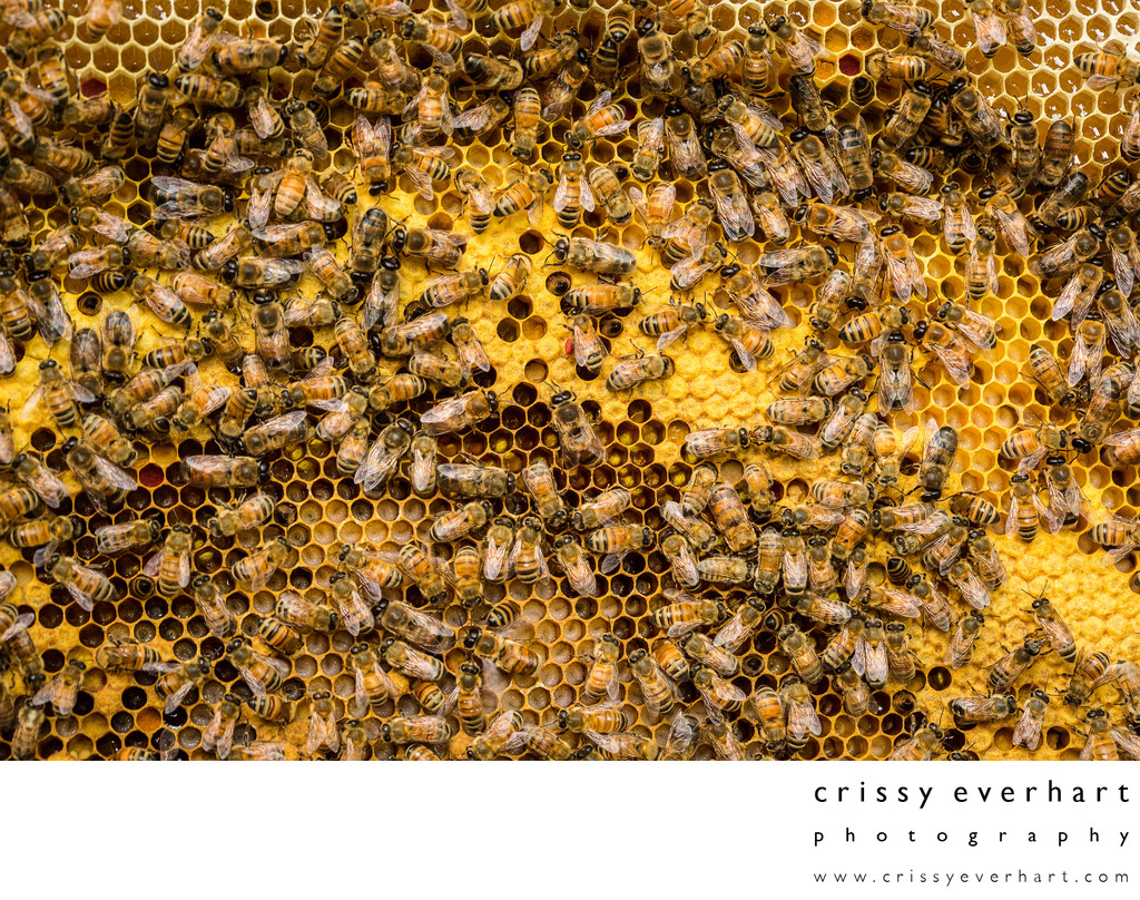 Honeycomb Photos - Pollen, Brood, Larvae, and Honey