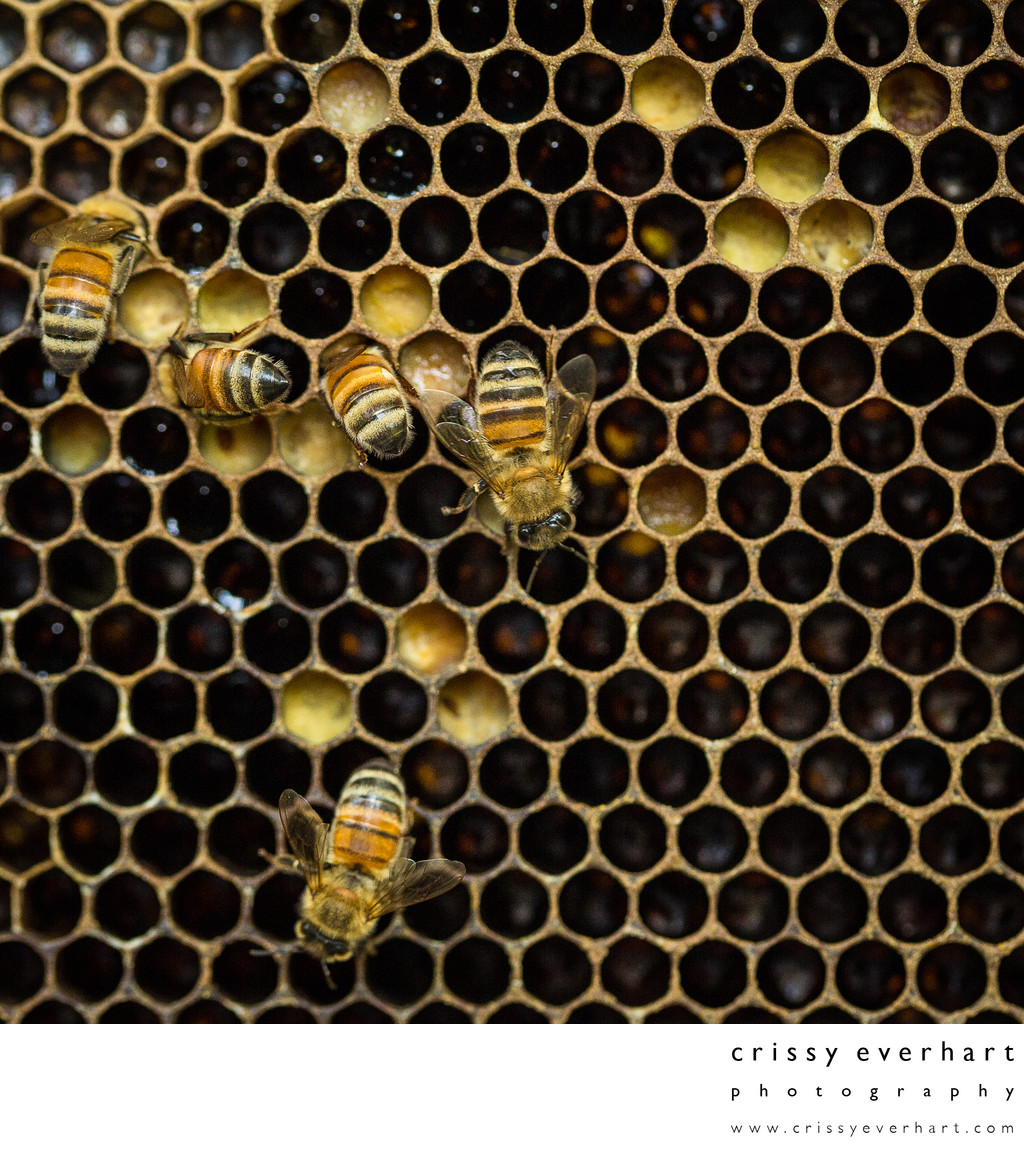 Honeycomb Cells with Pollen and Larvae