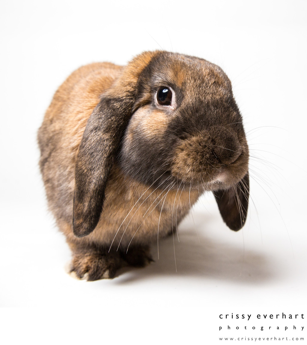 Exotic Pets - Professional Rabbit Photos