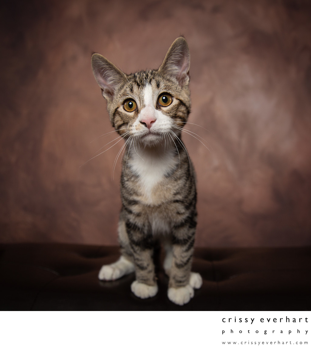 Cat Rescue Photographer in Chester County