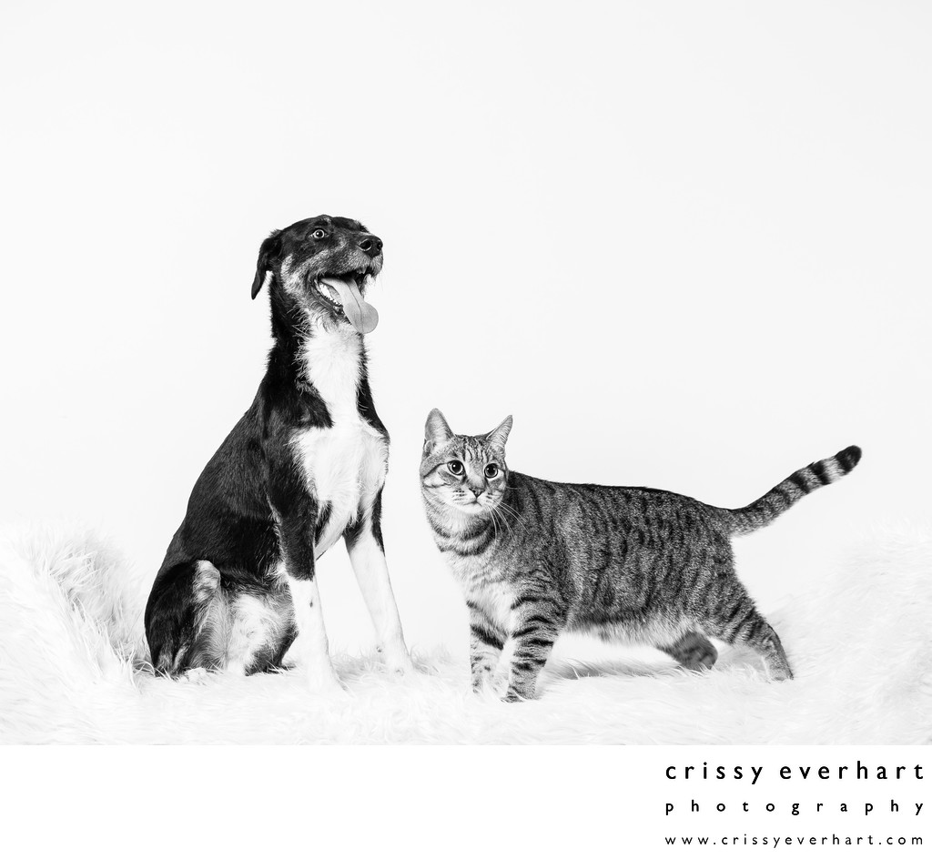 Studio Photo of Cat and Dog Siblings