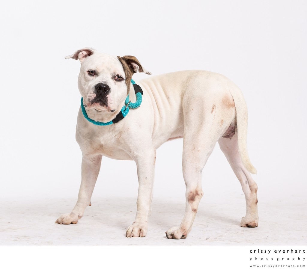 Professional Photos for Dog Shelters