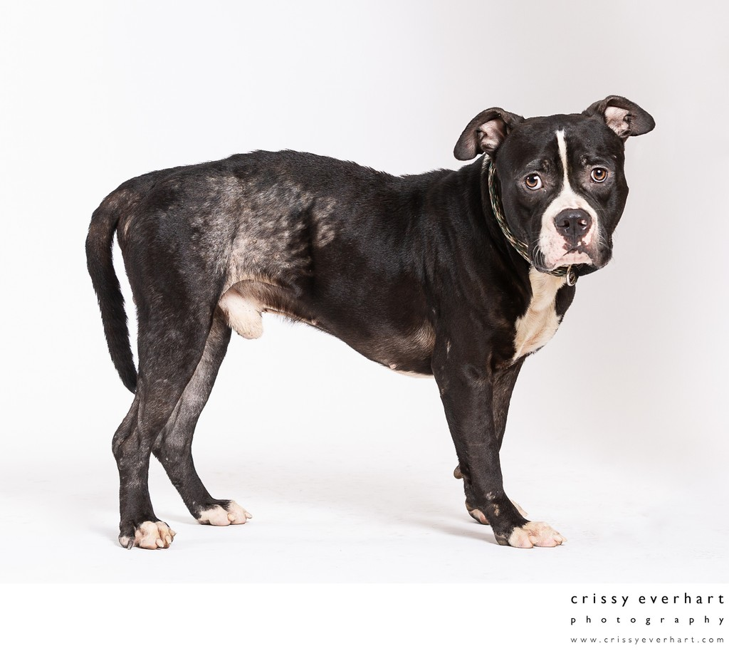 Photographer for Shelter Animals