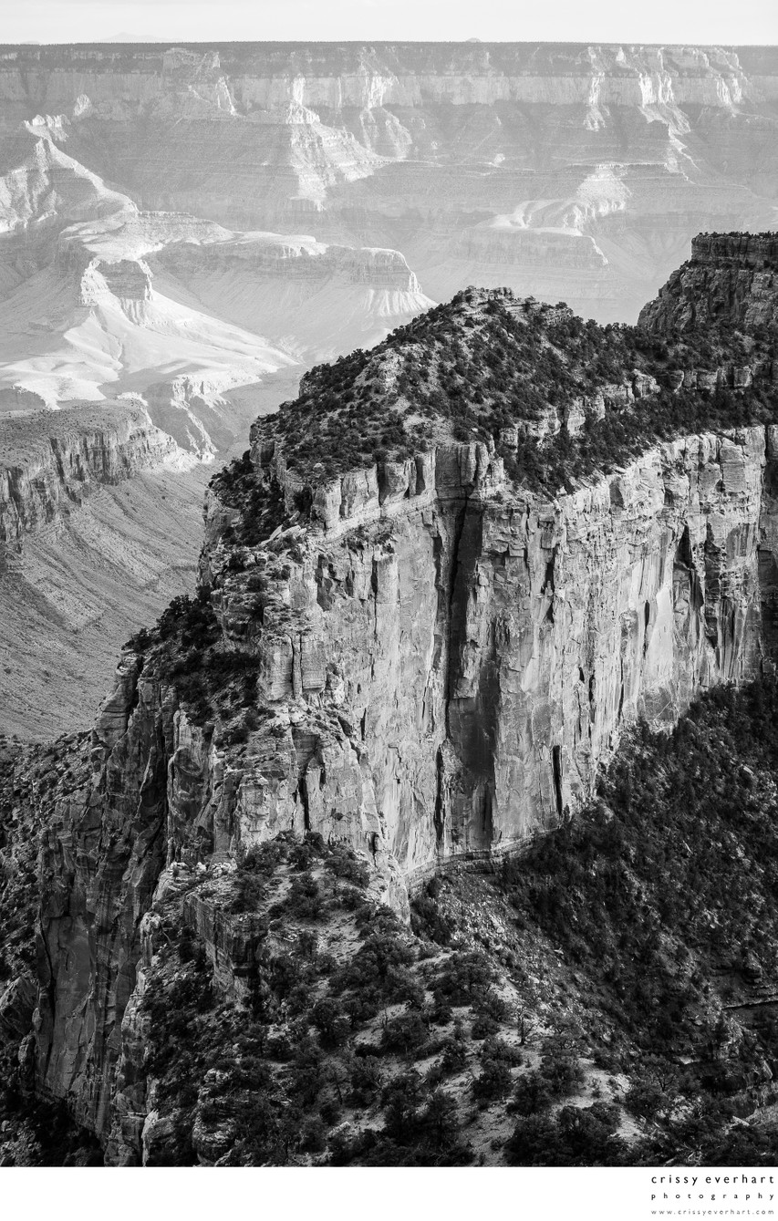 Grand Canyon North Rim Black and White Photography