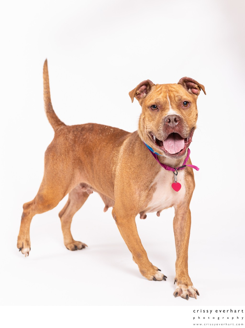 Adoption Photos for Shelter Dogs