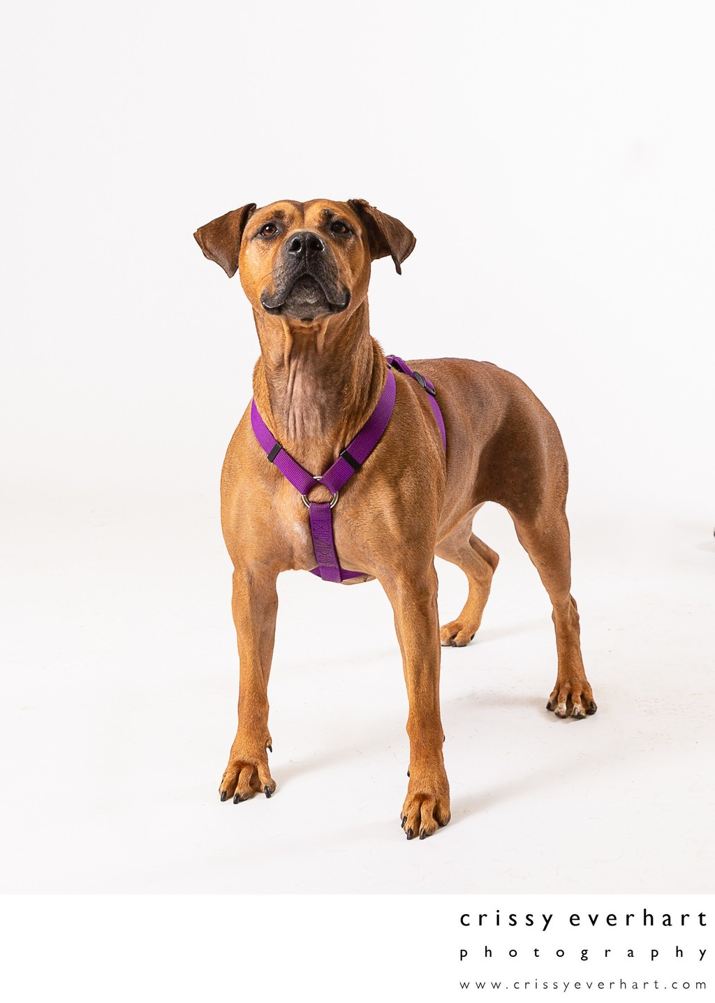 Shelter Dog Photo Shoot