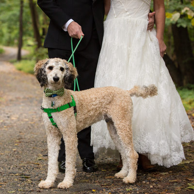 Poodle in Bow Tie - Wedding Photographer Who Loves Dogs