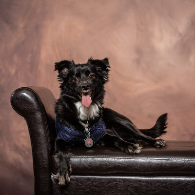 Professional Studio Portraits of Dogs