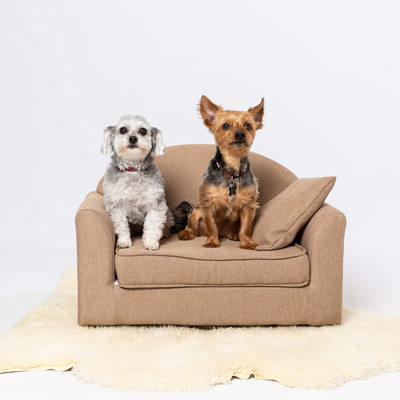 Dog Portraits - Pet Friendly Photo Studio