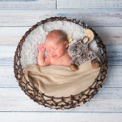 Newborn in Basket with Stuffed Animal