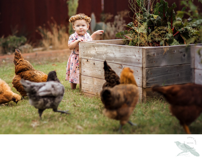 Orange County Child Photographer | Toddler & Chickens