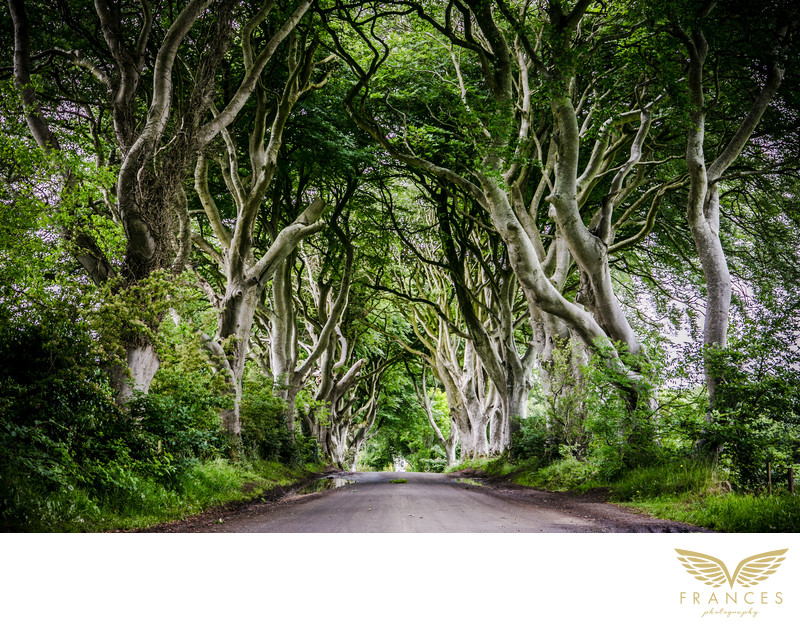 Travel photography dark hedges Ireland photo