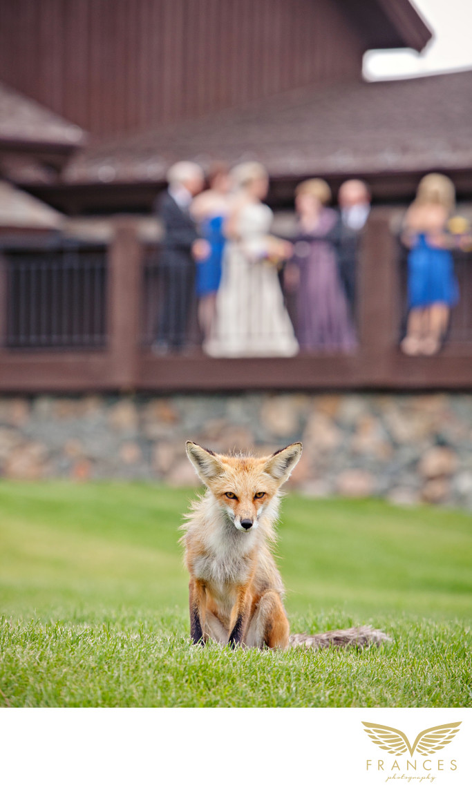 Colorado Wedding Photographers Devils Thumb Ranch Fox
