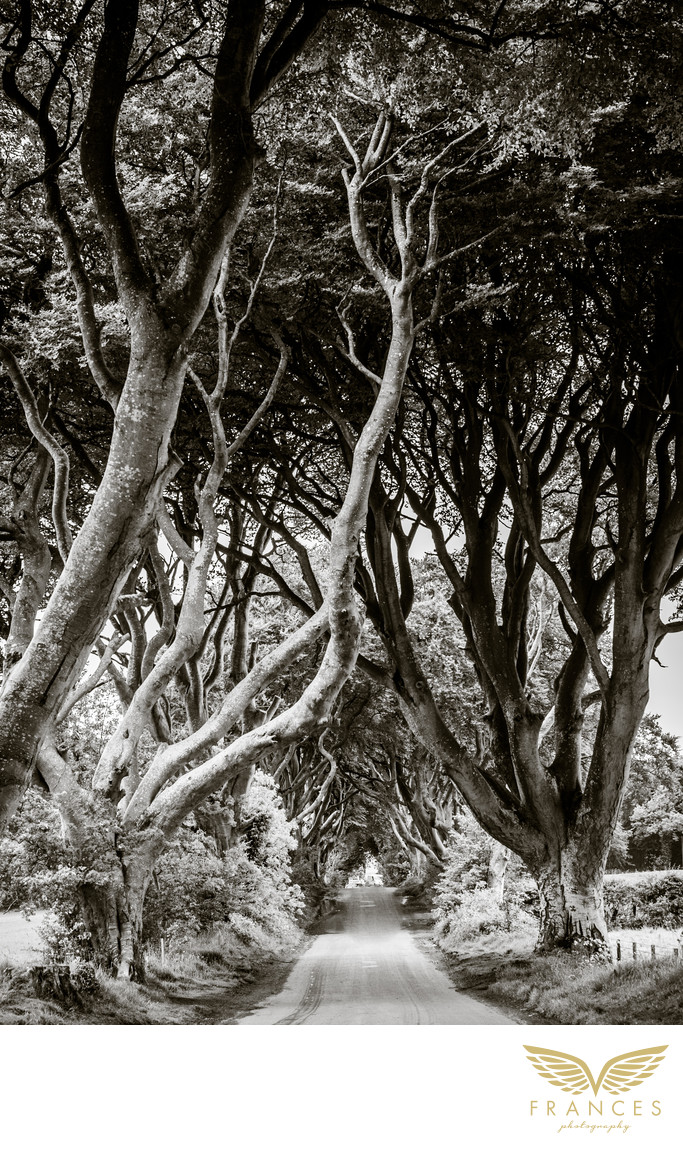 Travel photography Northern Ireland dark hedges