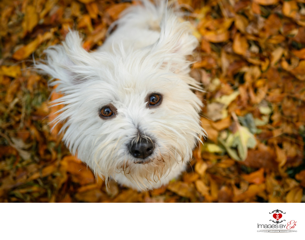 Las Vegas Fall pet photos
