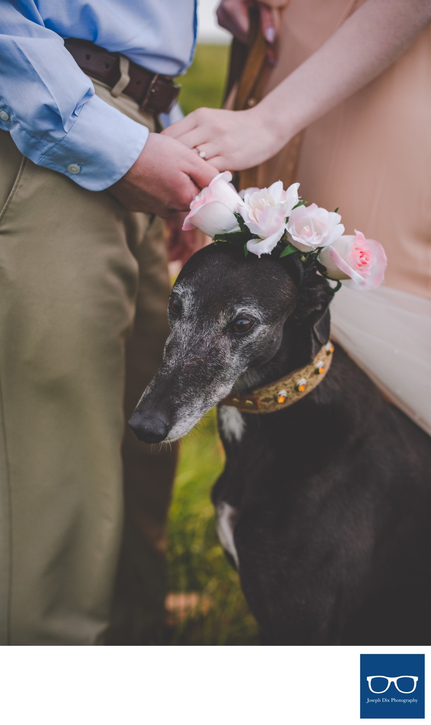 Black Balsam Engagement Session with Pet Greyhound