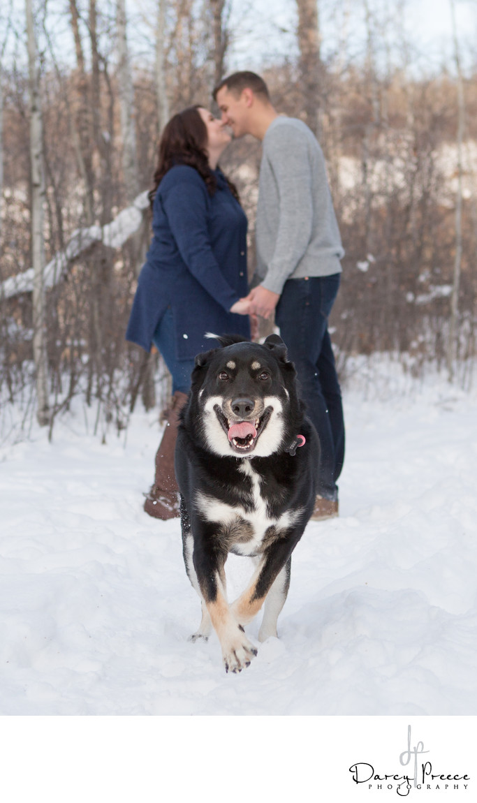 Dog excited engagement photos Edmonton