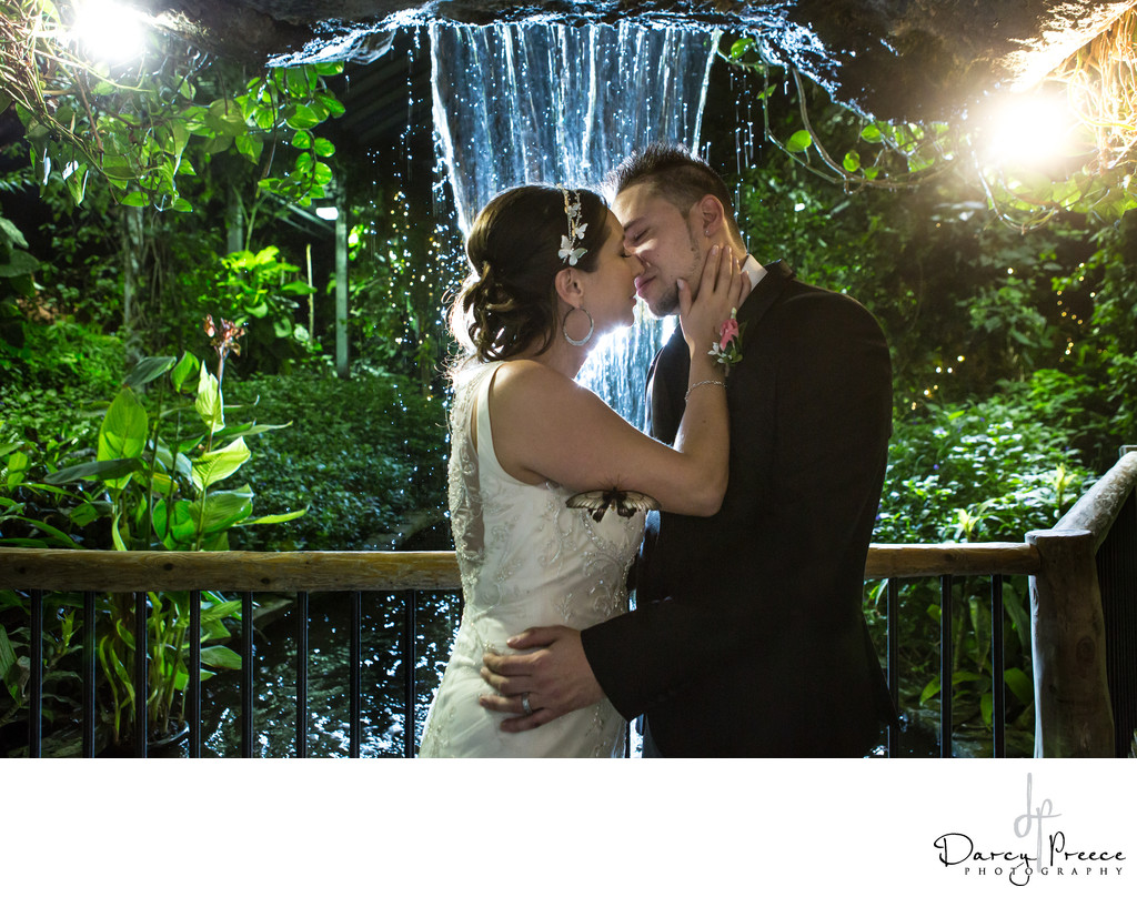 Cambridge Butterfly Conservatory Wedding Photographers