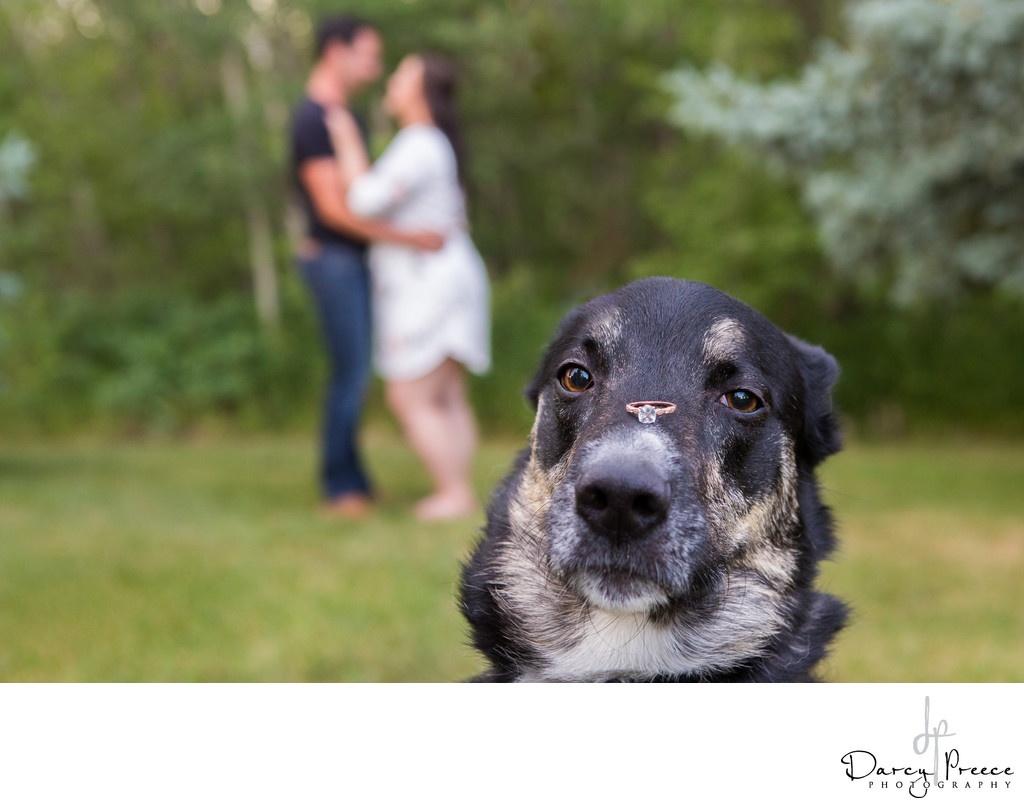 Dog Engagement photo Hastings Lake Gardens