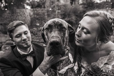 Colorado Great Dane at Wedding