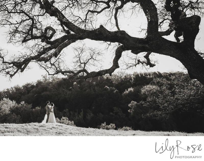 Romantic Sonoma Wedding Photographer