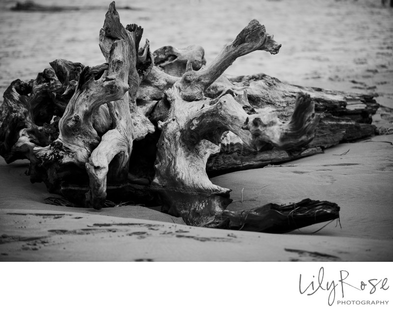 Mendocino Driftwood Wedding Photographer