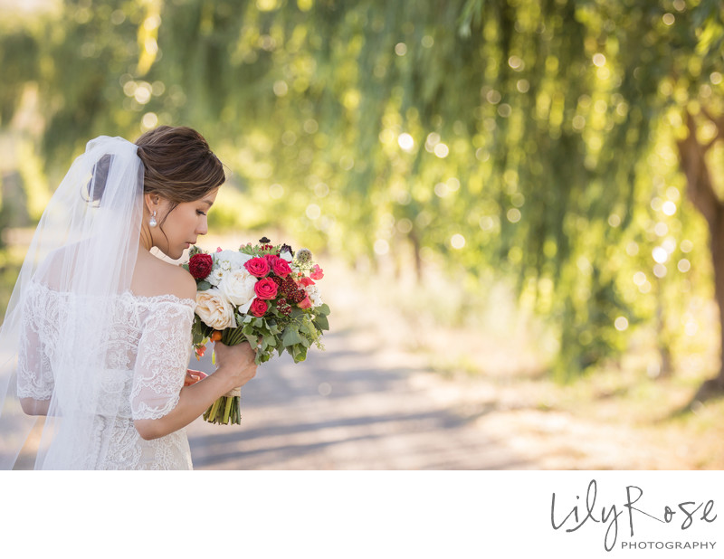 Cline Cellars Sonoma Wedding Photographers Bridal Image